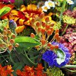 flower-3322329_1920