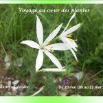 photo flyer Véronique 2205